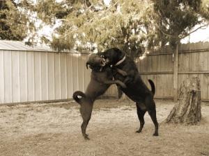 dogfightps1